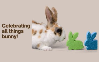 Celebrating all things bunny!